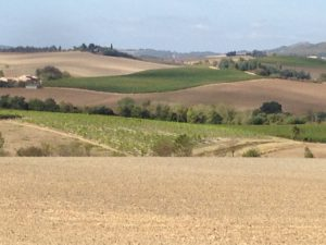 Rolling French country side in Aude